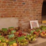 Variétés anciennes : le top nutritionnel