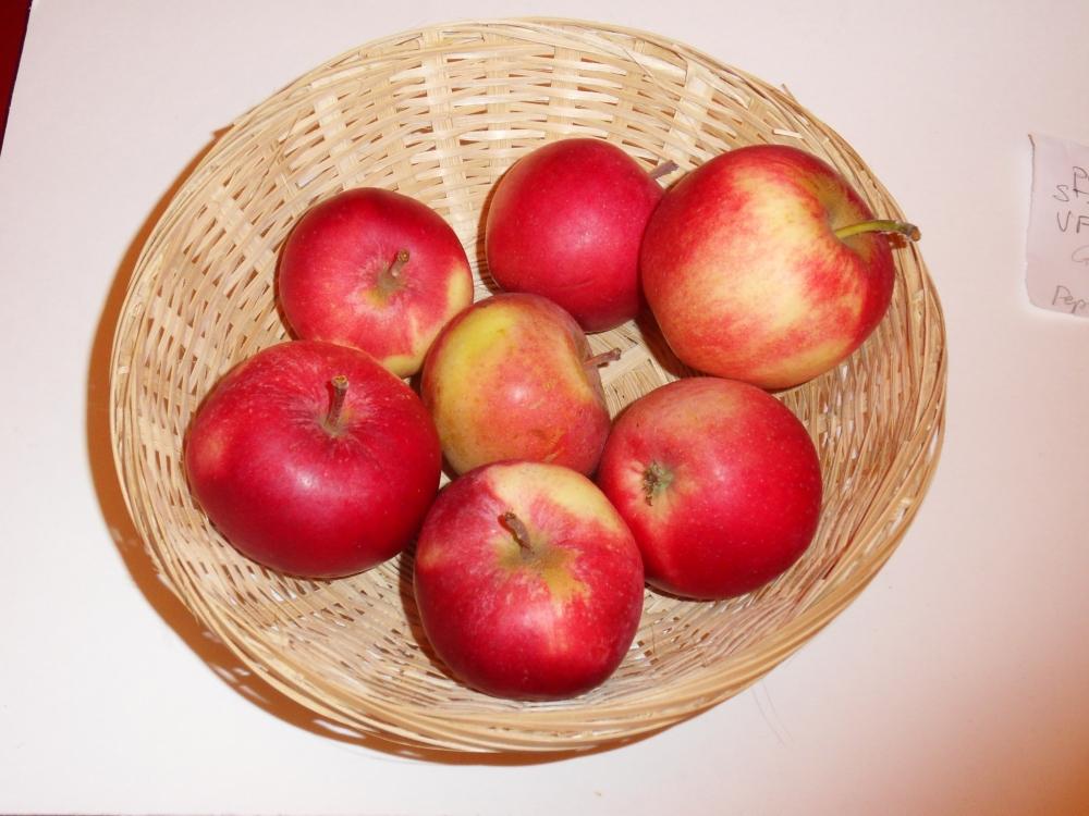 Pomme Saint Jean