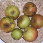 Aigre Elie (fruit).