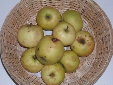 Amer blanc (fruit).