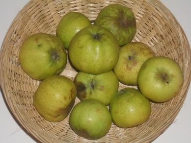 Amère de Beauvoir 1 (fruit).