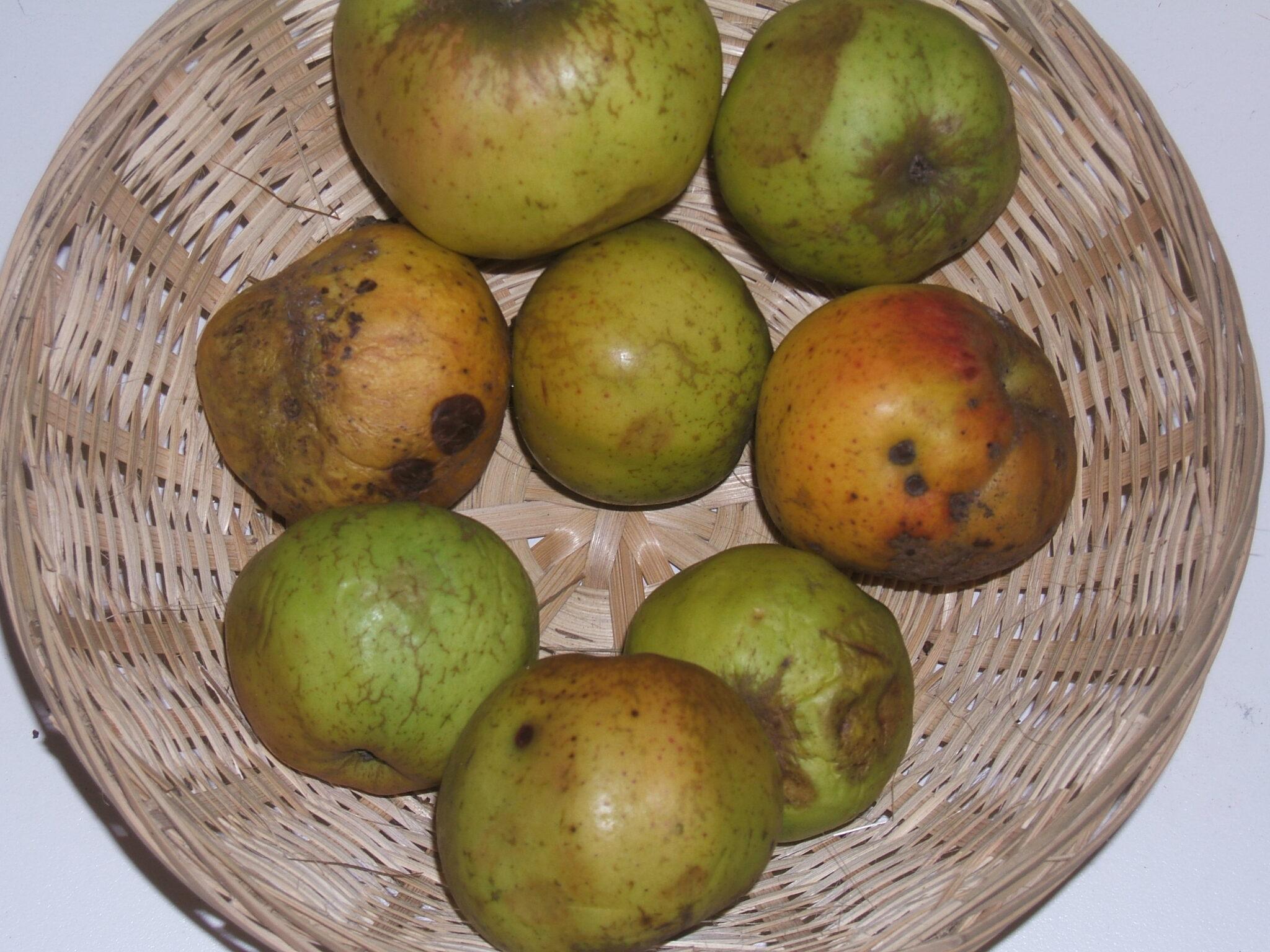 Amère de Beauvoir 2 (fruit).