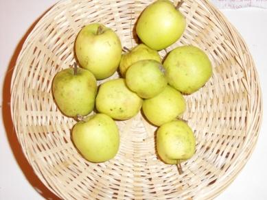 Amère de Bray 3 (fruit).