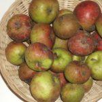 Amère de Merval 1 (fruit).