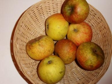Amère précoce (fruit).