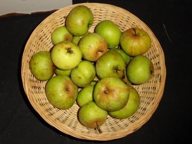 Antoinette 1 (fruit).