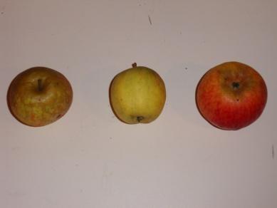 Antoinette 2 (fruit).