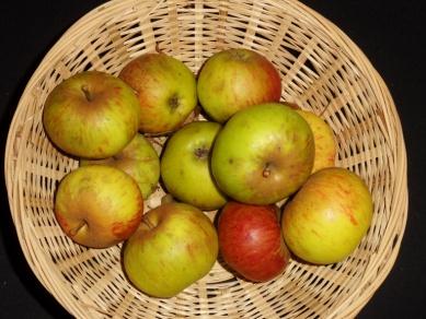 Antoinette de Caux 1 (fruit).