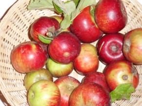 Api rouge gros (fruit).