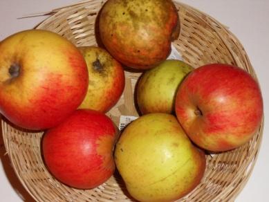 Argile plate (fruit).