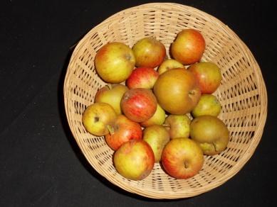Argile rouge (fruit).