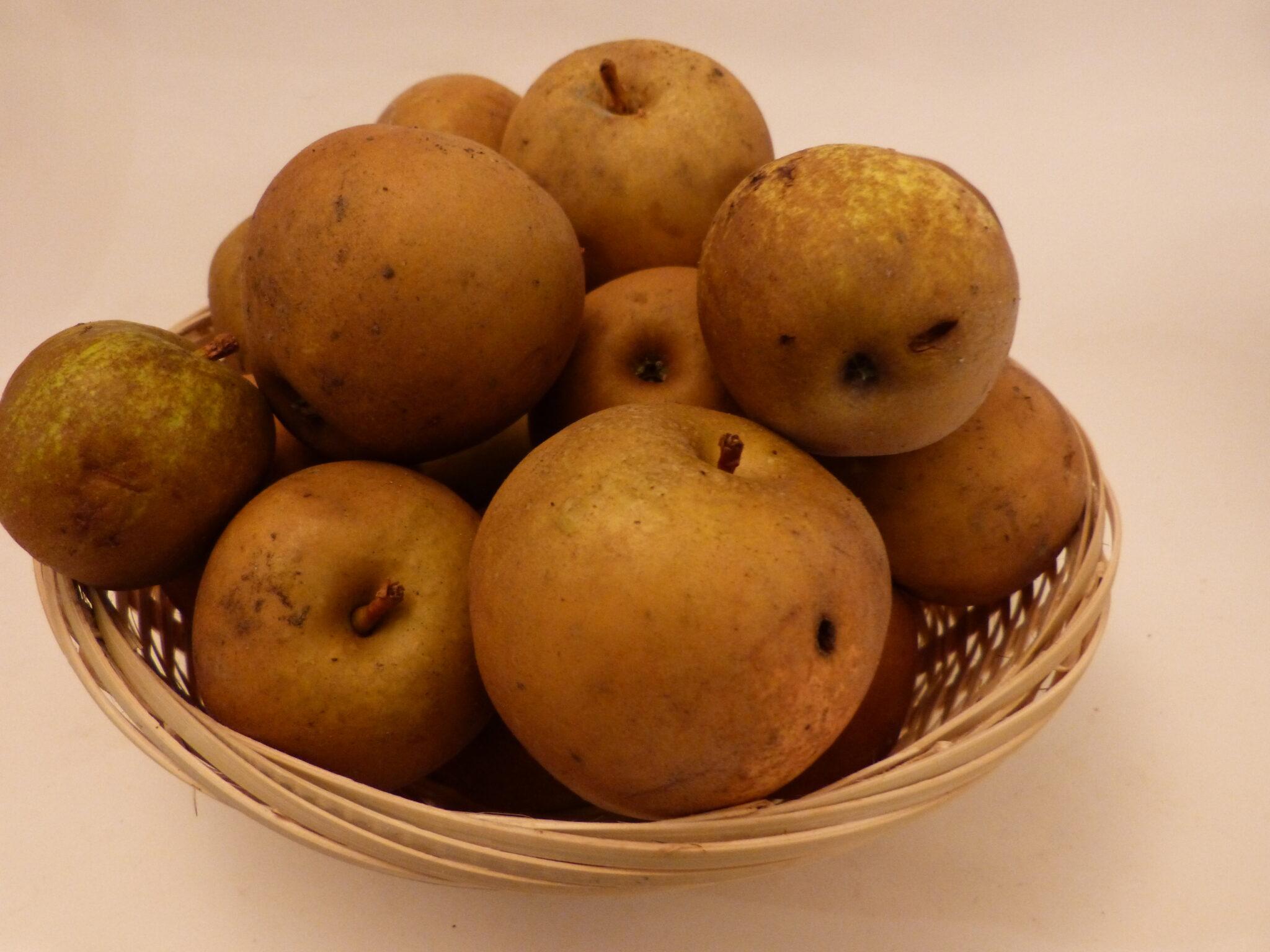 Argile très grise (fruit).