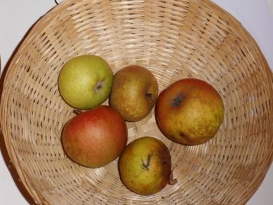 Armagnac 2 (fruit).