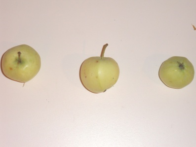 Astracan blanche (fruit).