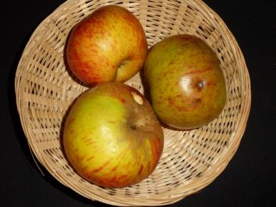 Bailleul rouge de Bray (fruit).