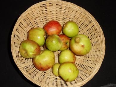 Barbarie 2 (fruit).