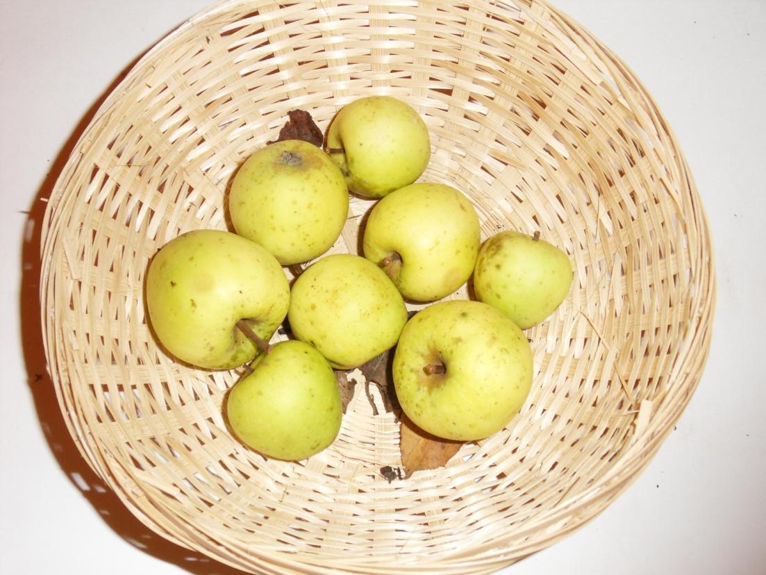 Belle amère (fruit).