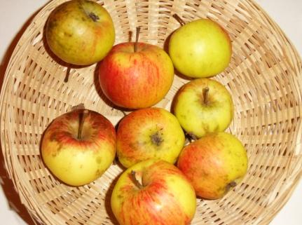 Belle Bertelle (fruit).