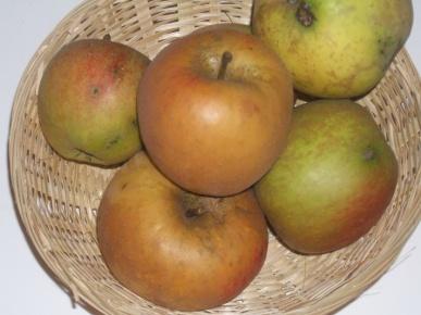 Belle de Boskoop grise (fruit).