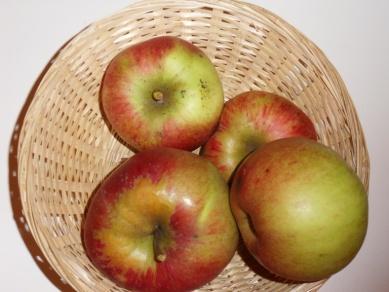 Belle de Pontoise 3 (fruit).