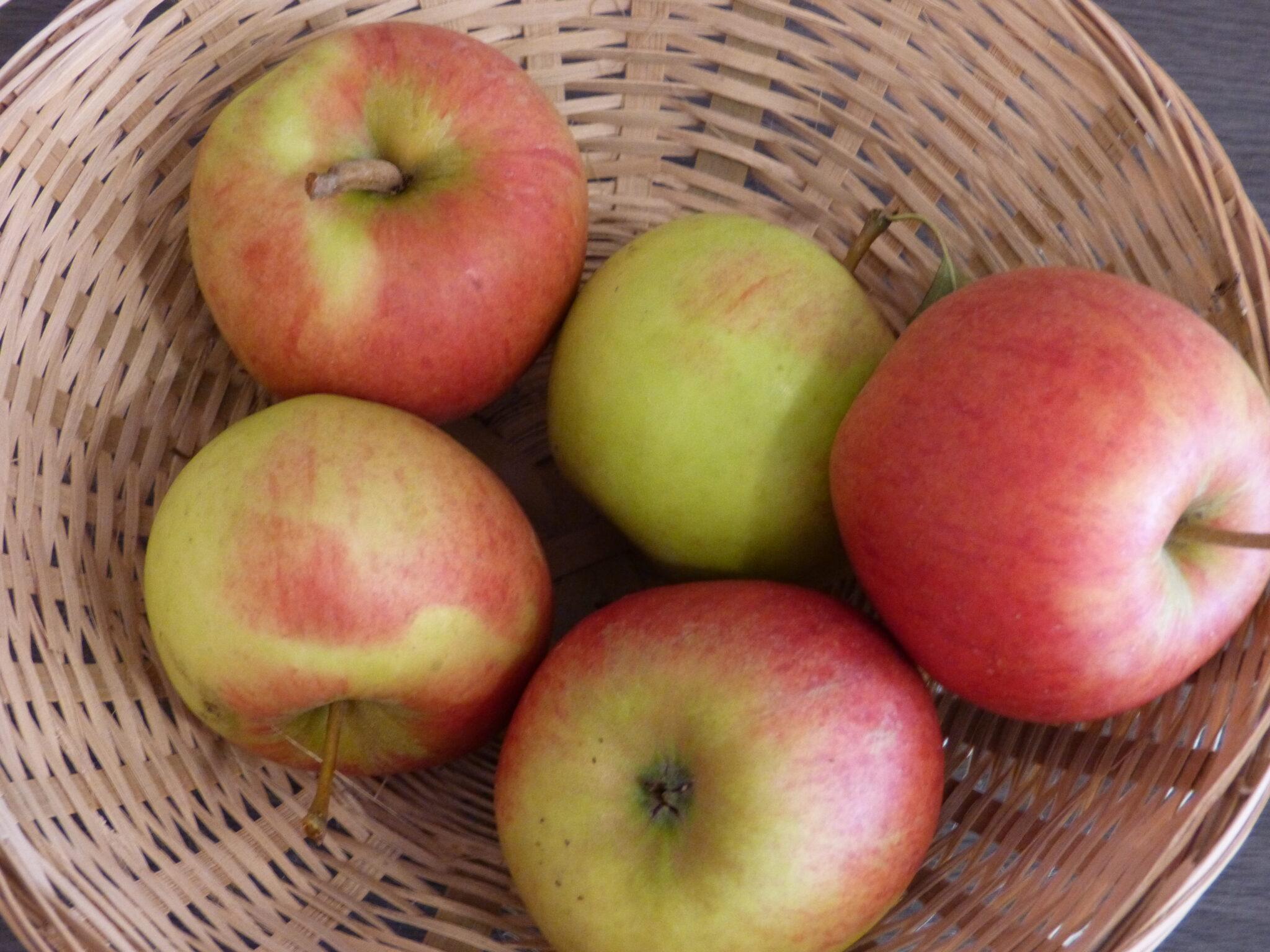 Belle de Tours (fruit).