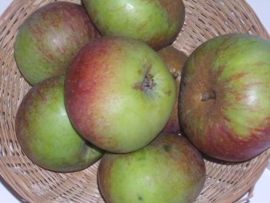 Belle du Bois (fruit).