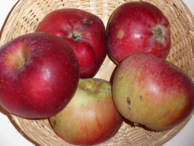 Belle du Havre 1 (fruit).