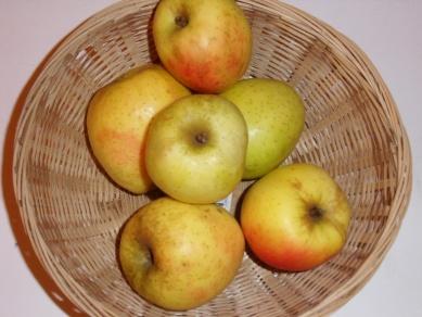 Belle fille Normande (fruit).