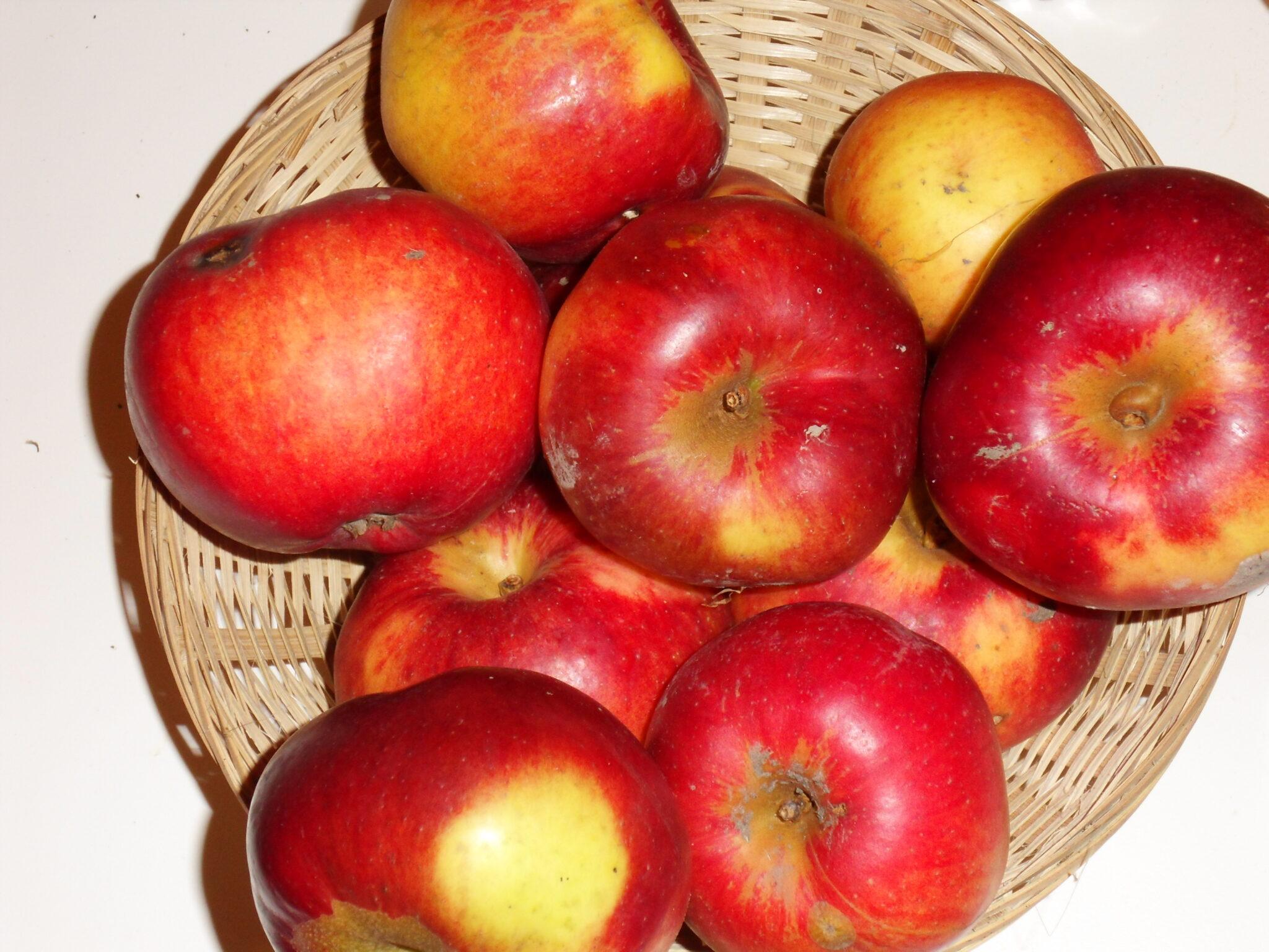 Belle Fleur Double (Cézilly) (fruit).