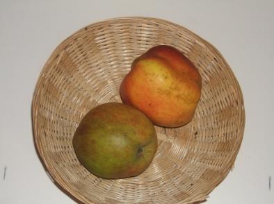 Belle Fleur Double (Jacquet) (fruit).
