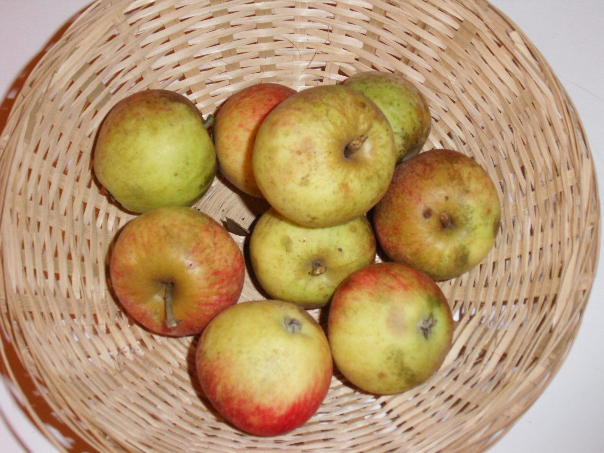 Belle Pomme Fréret (fruit).