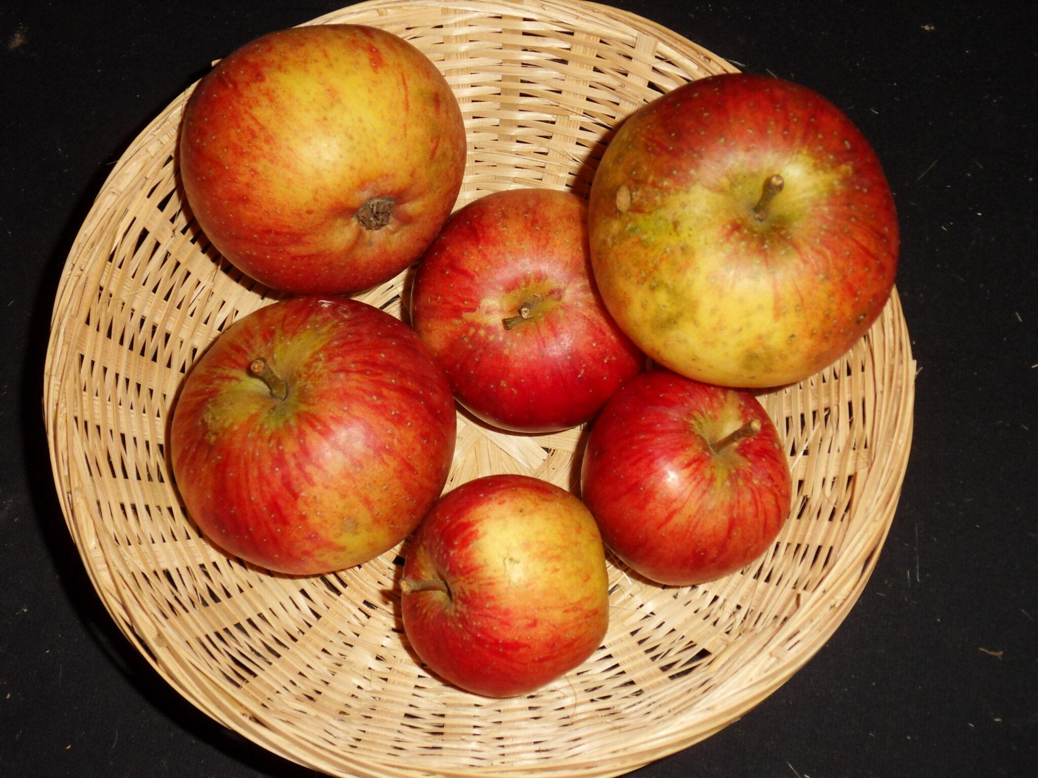 Bénédictin tardif (fruit).
