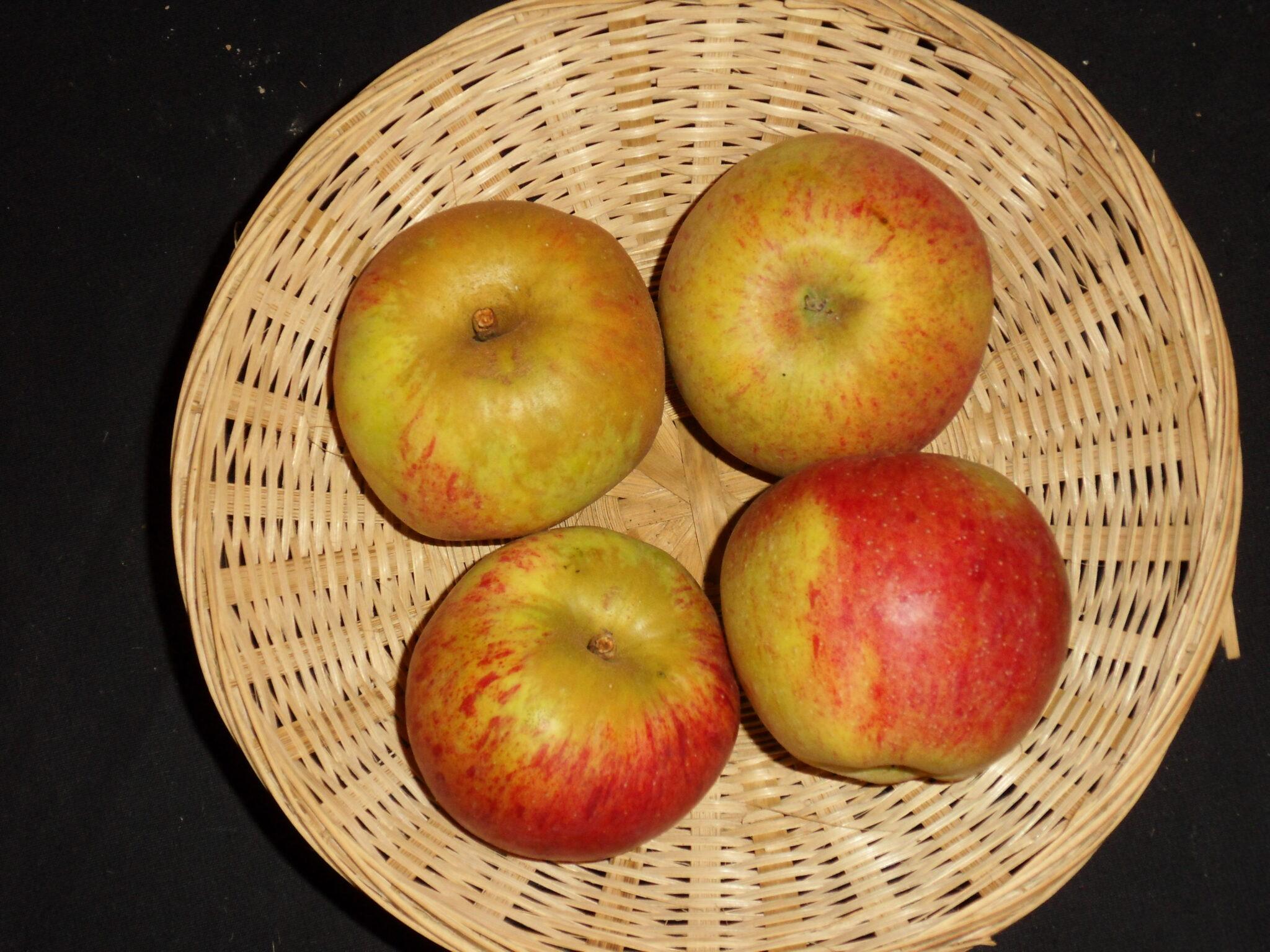 Beurrière (fruit).
