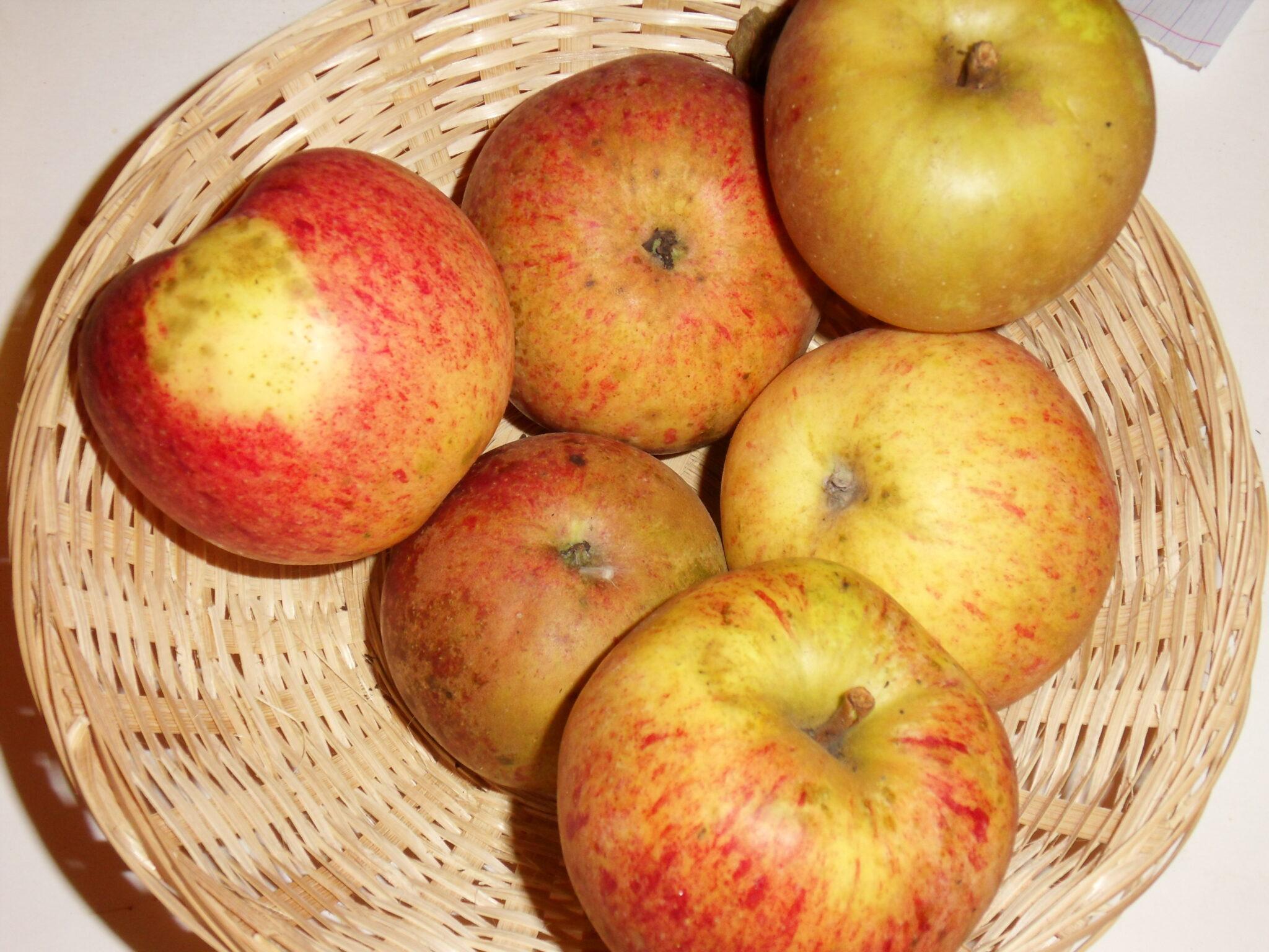 Beurrière rouge (fruit).