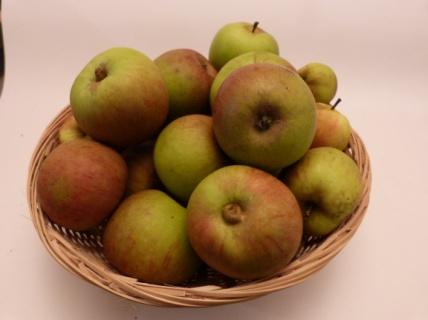 Binet amer (fruit).