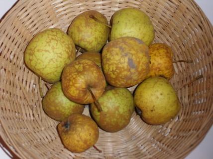 Binet doré (fruit).