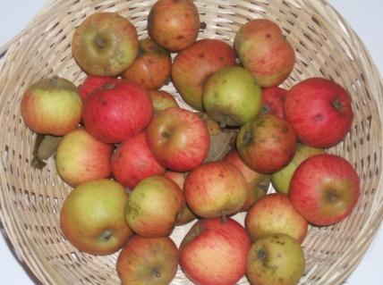 Binet rouge (fruit).