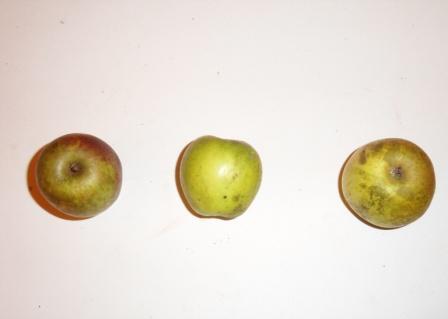 Binet violet 2 (fruit).
