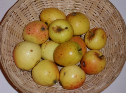Bisquet (fruit).