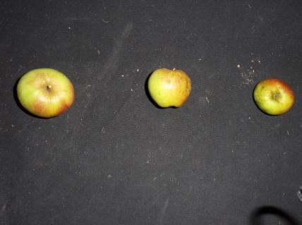 Blanc Mollet 2 (fruit).