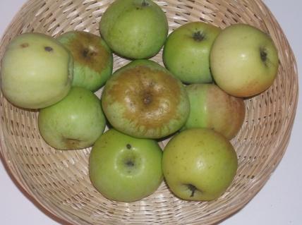 Blanche de la Sarthe (fruit).