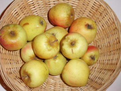 Bouteille commune 1 (fruit).