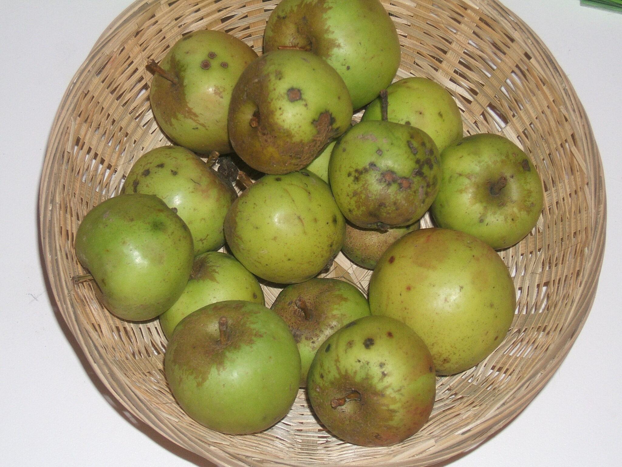 Bouteille commune 2 (fruit).