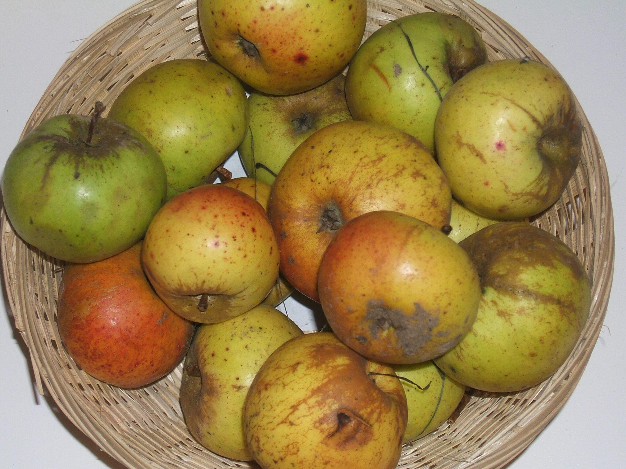 Bramtôt 2 (fruit).