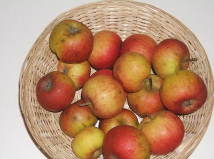 Caillouel 1 (fruit).