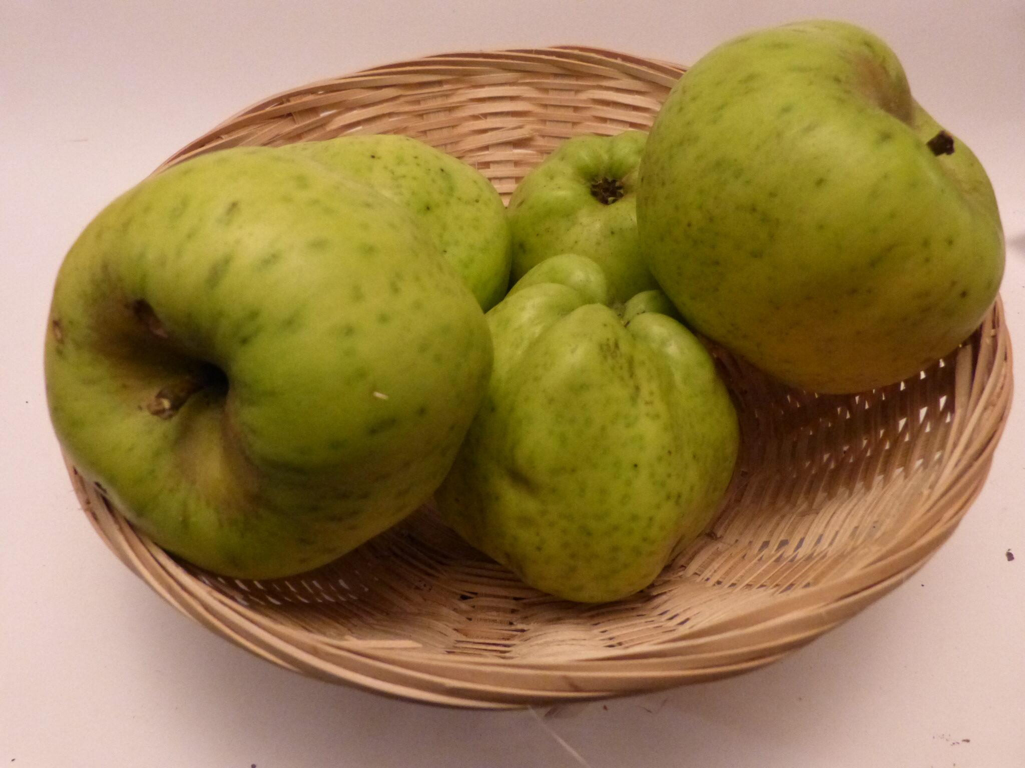 Calville Blanc (fruit).