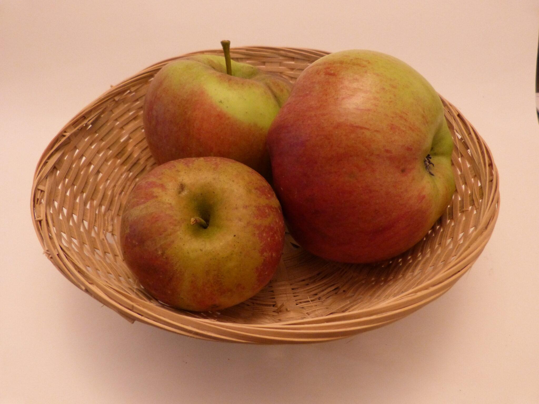 Calville Couturier (fruit).