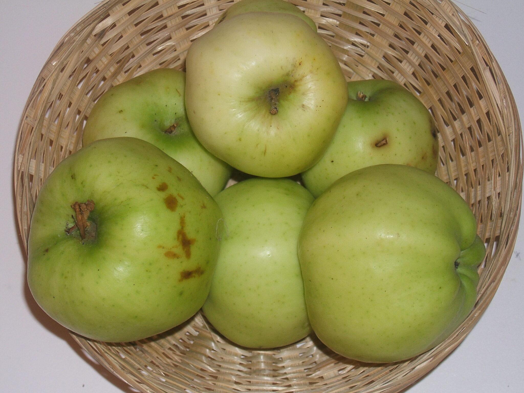 Calville dAoût (fruit).