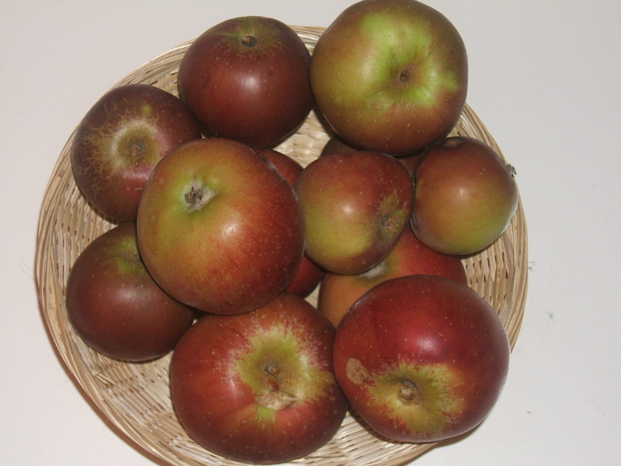 Calville Noir (fruit).