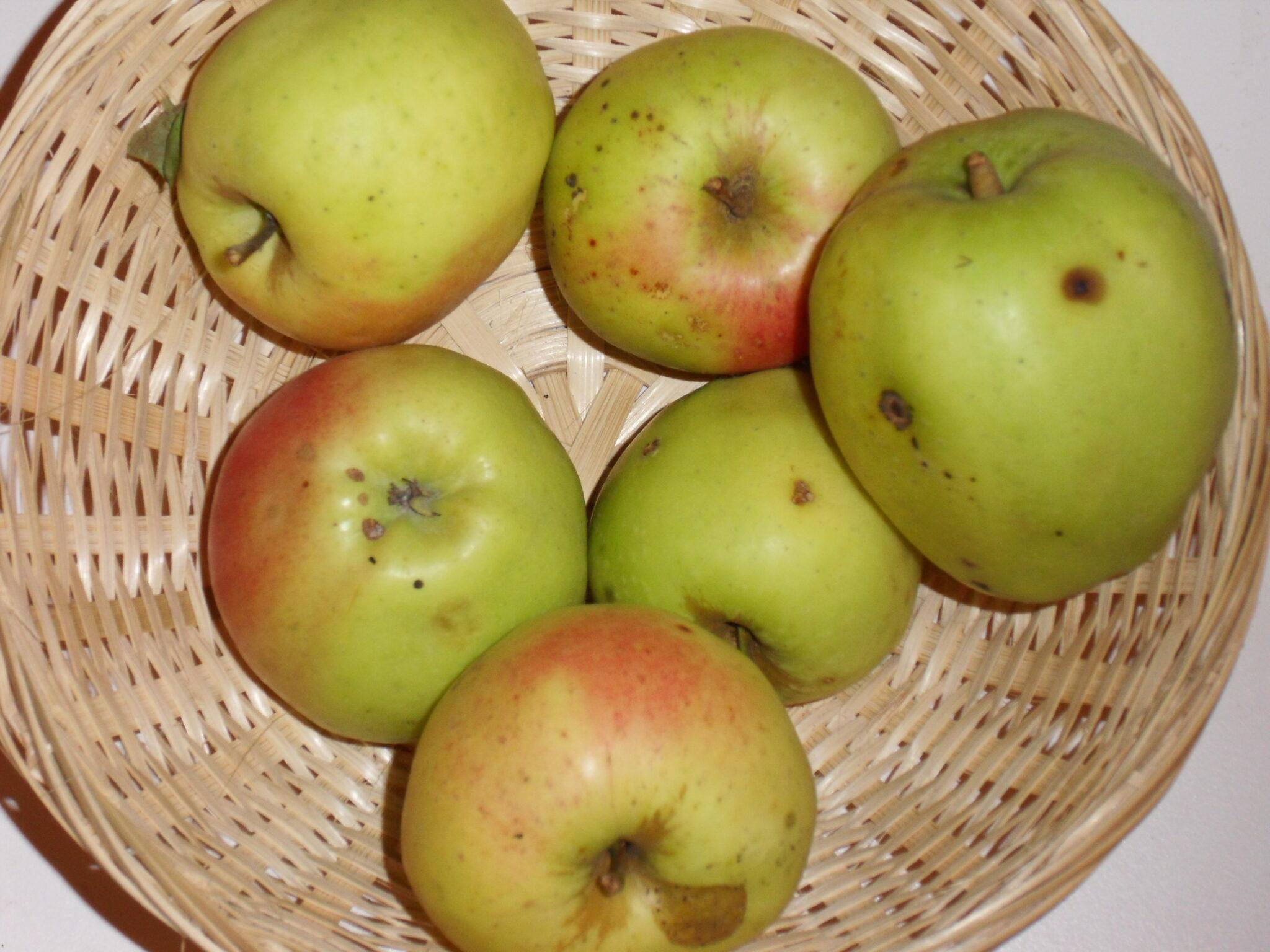 Calville Saint Sauveur (fruit).